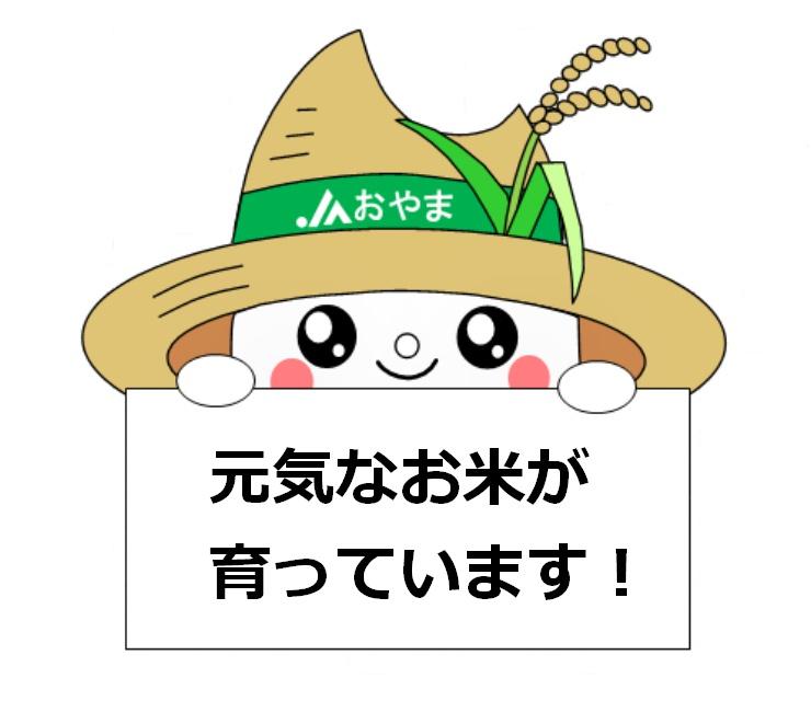 元気なお米が育っています!
