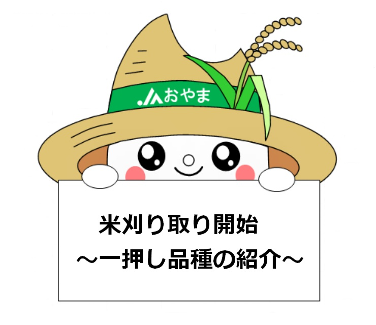 米刈り取り開始~一押し品種の紹介~