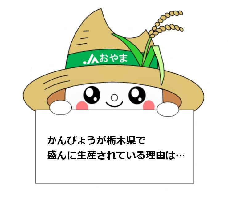 かんぴょうが栃木県で盛んに生産されている理由は…