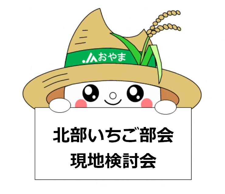 2017年産苗の生育状況を確認!~北部いちご部会現地検討会~
