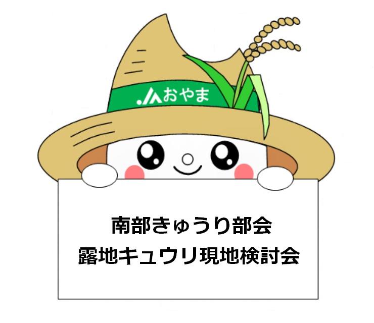 昨年並みの生育~南部きゅうり部会露地キュウリ現地検討会~
