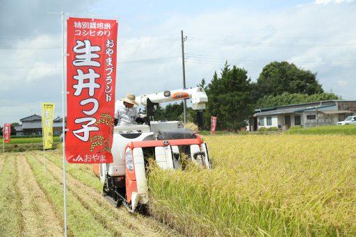 お米の刈り取りが始まりました!~新米の季節到来~