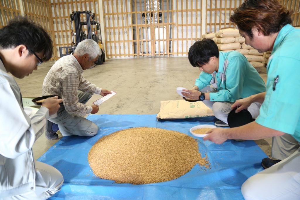 種子小麦 全量が合格