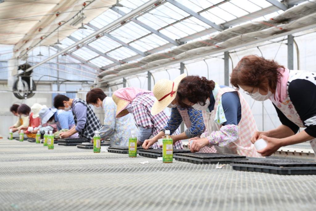 「地域に花を」女性会が種まき