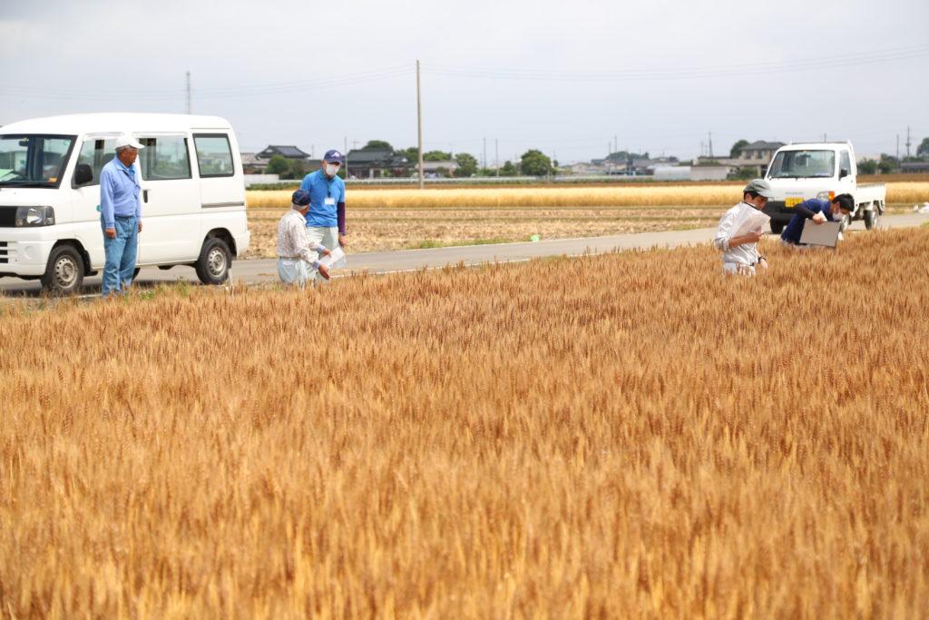 安全・安心小麦へ 採種部会確認会