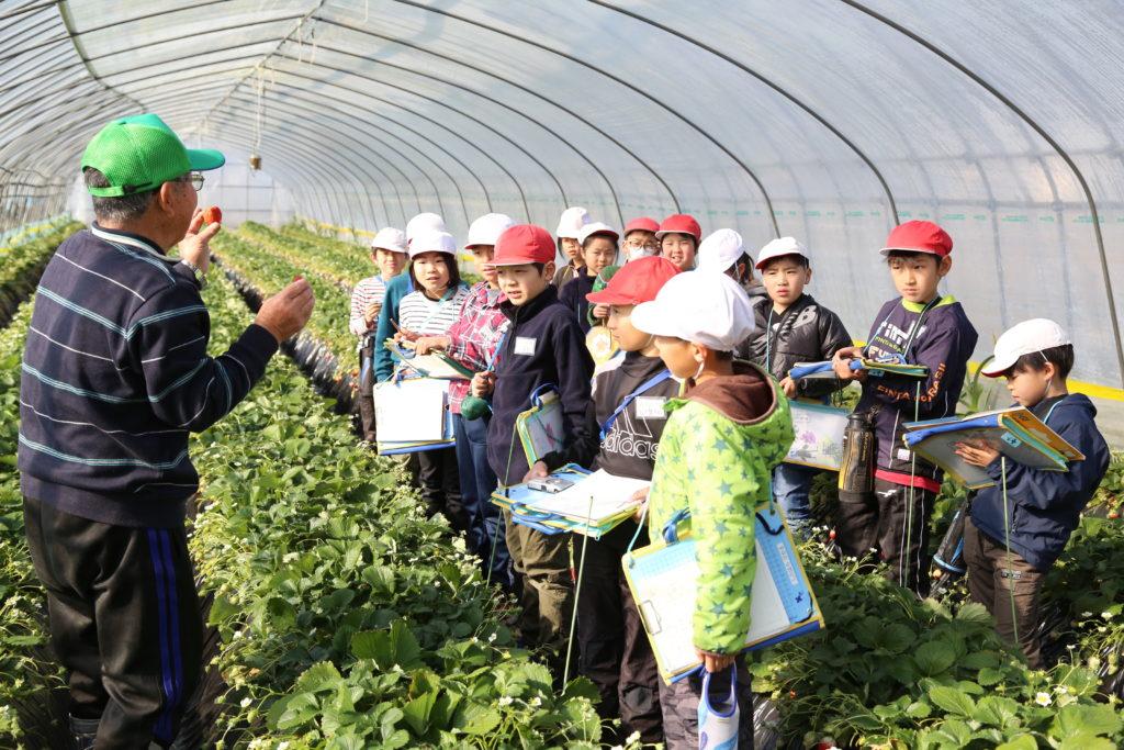 小山市立豊田北小 イチゴ栽培を見学 生産者・田波さん 10年超続く食育