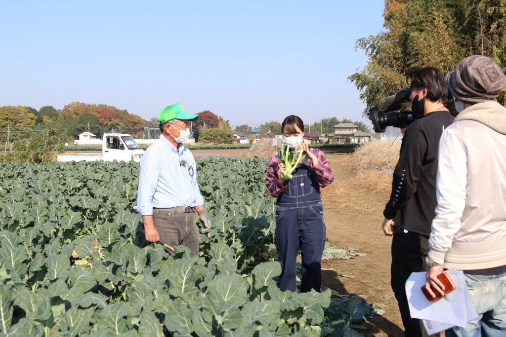 ブロッコリー 魅力を発信 JAおやまの生産者NHKの取材受ける