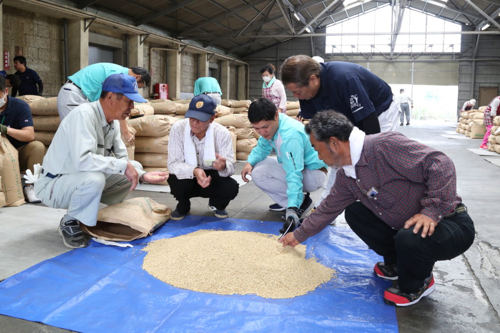 ビール大麦種子検査 適期収穫呼び掛け