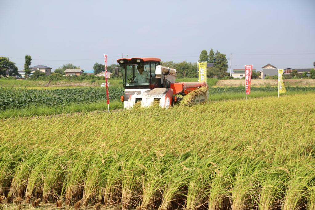 ブランド米 刈り取り最盛