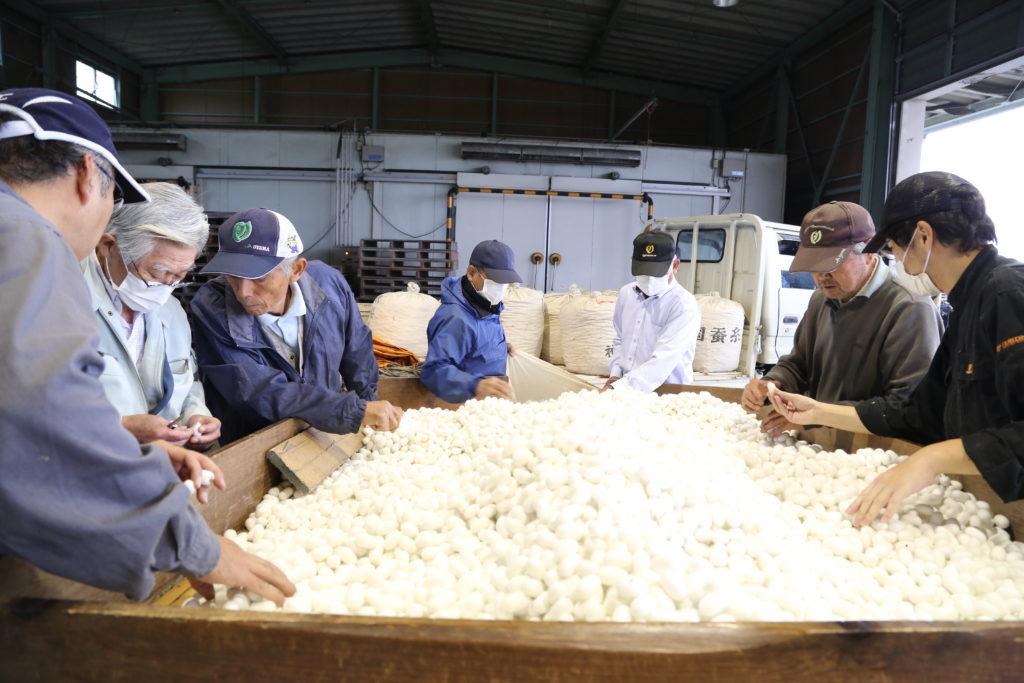晩々秋蚕期繭を出荷 着物で275反分