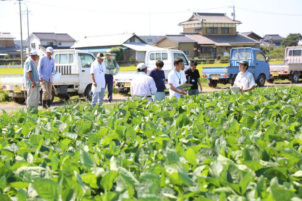 大豆の検討会 生育状況確認