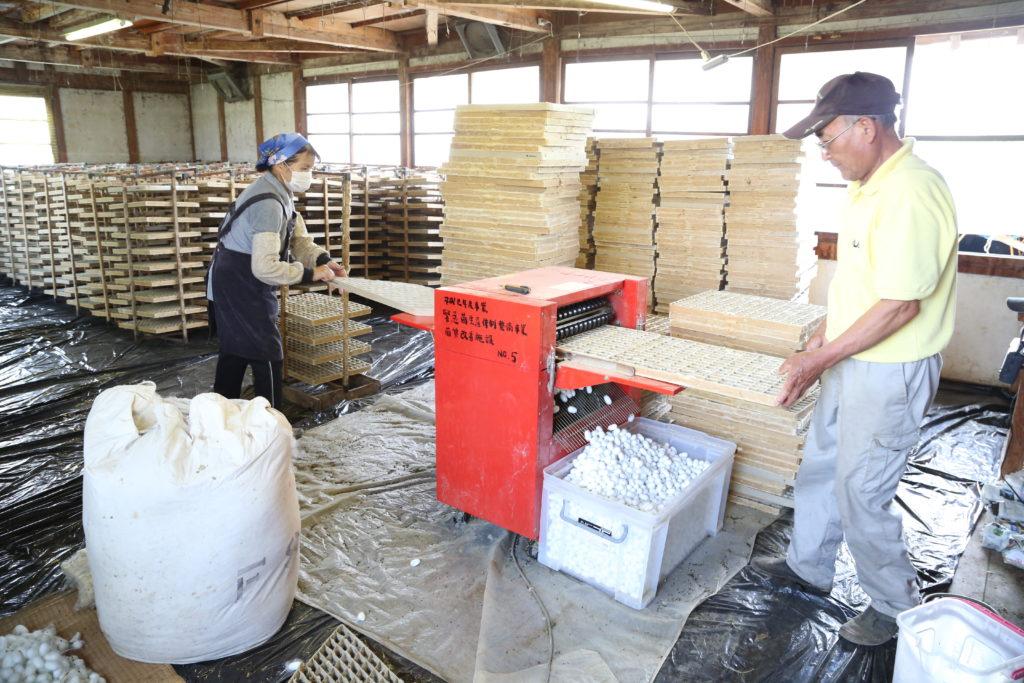 高品質繭出荷に汗 県内一の産地守る