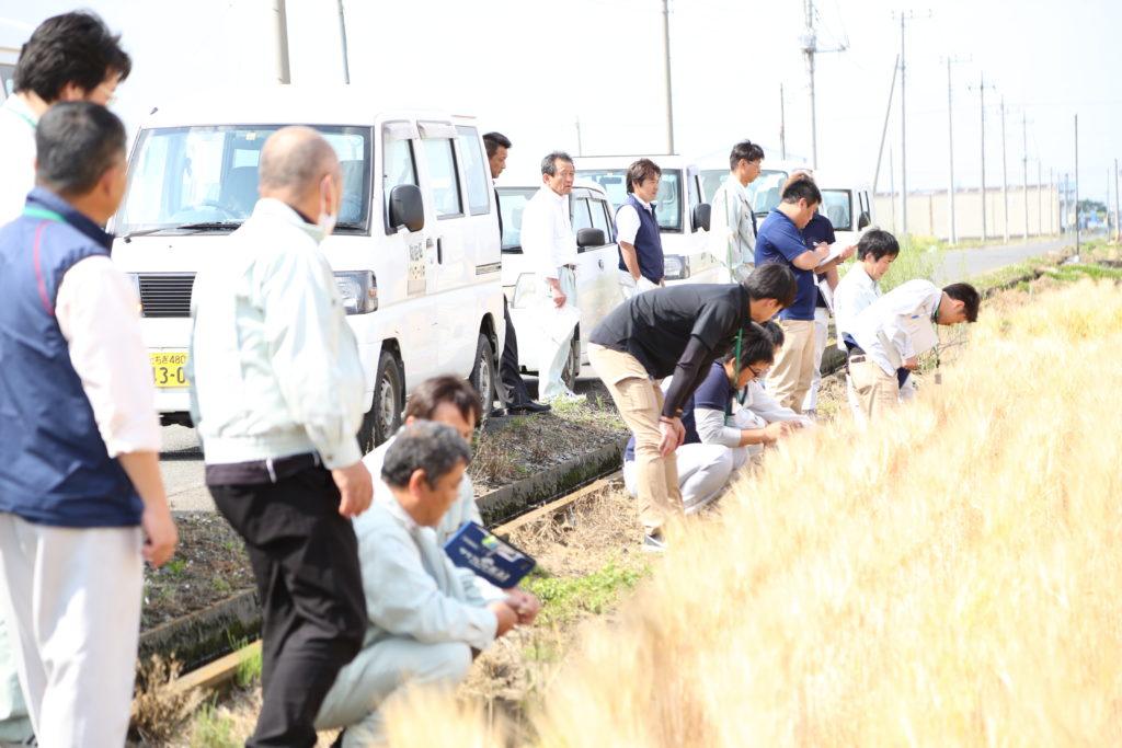 ビール大麦適期収穫を~栃木・JAおやま~