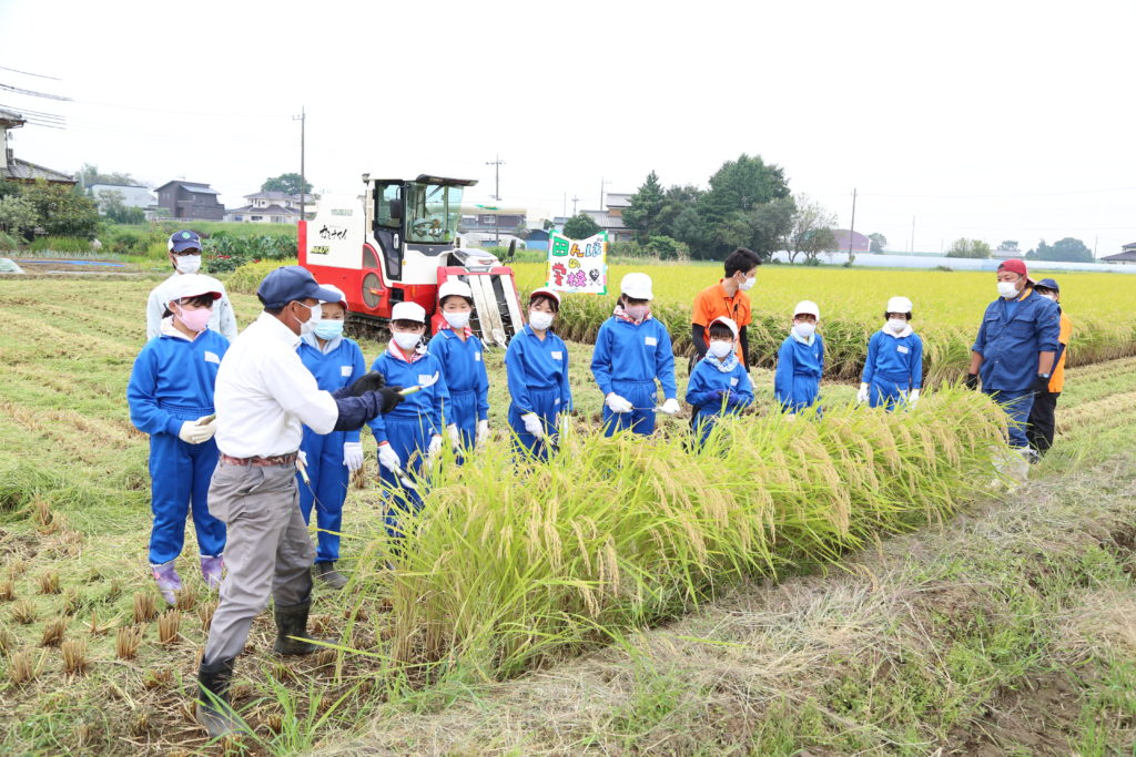 食と農 現場で学ぶ 稲刈り体験 青年部も指導