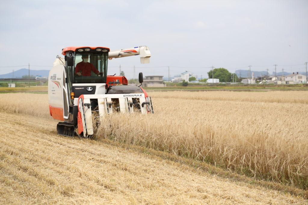 ビール大麦収穫順調 適期作業を呼び掛け