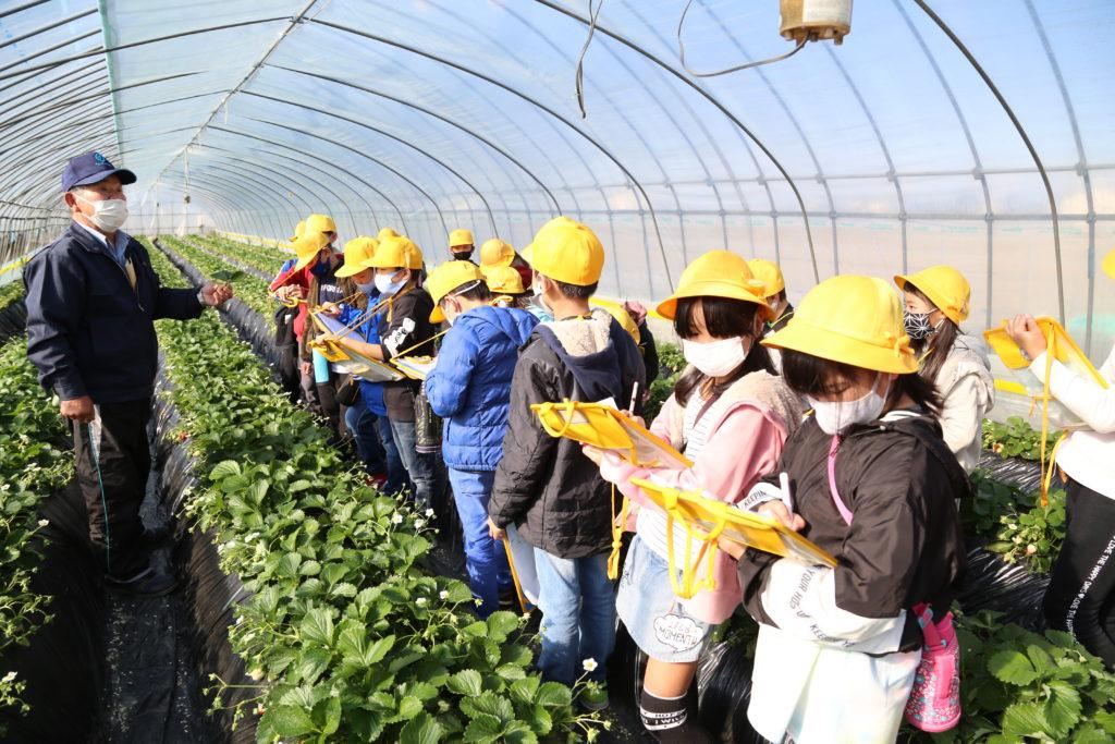 地域農家に関心を イチゴハウス見学