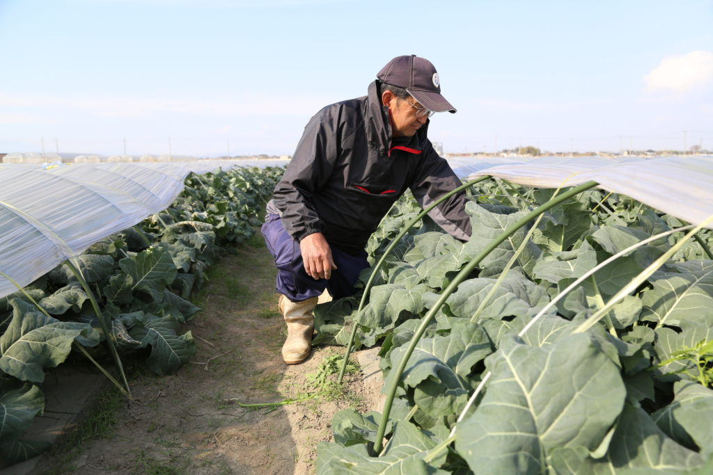 ブロッコリー栽培独学で 高品質生産まい進