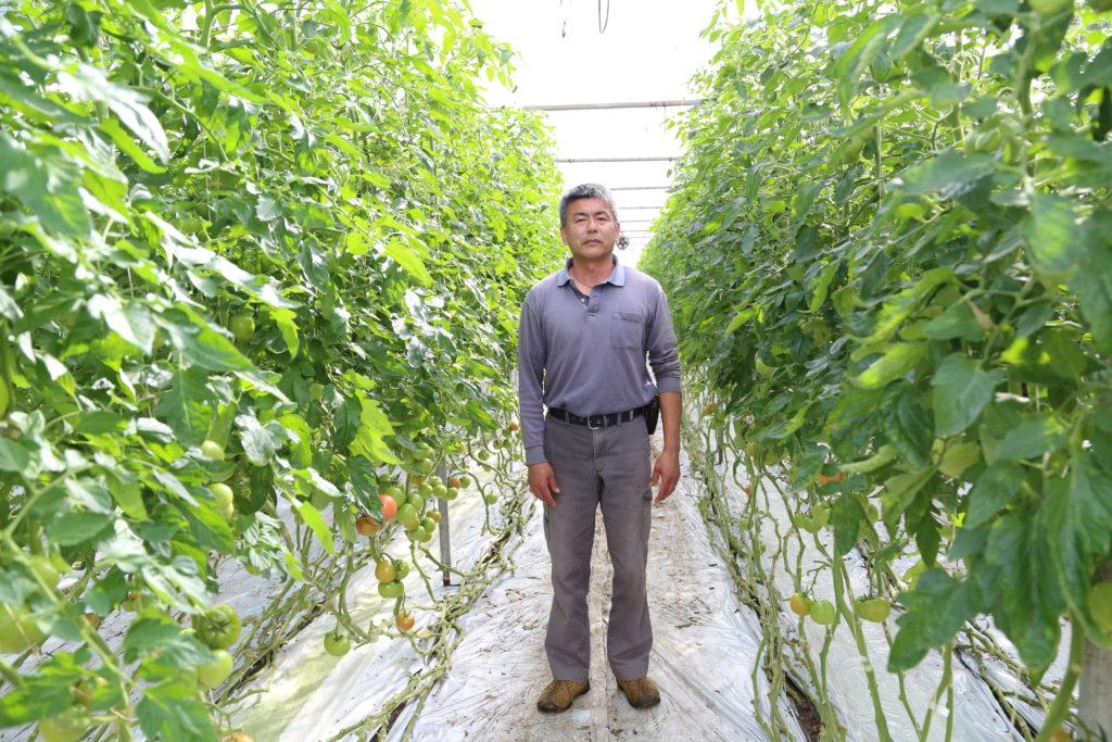 トマト食味を大切に 栃木・JAおやま北部トマト部会 有野力さん