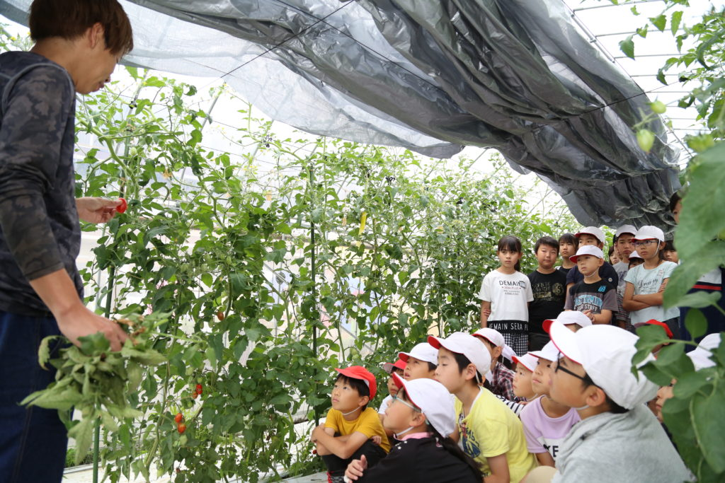 児童にトマト授業