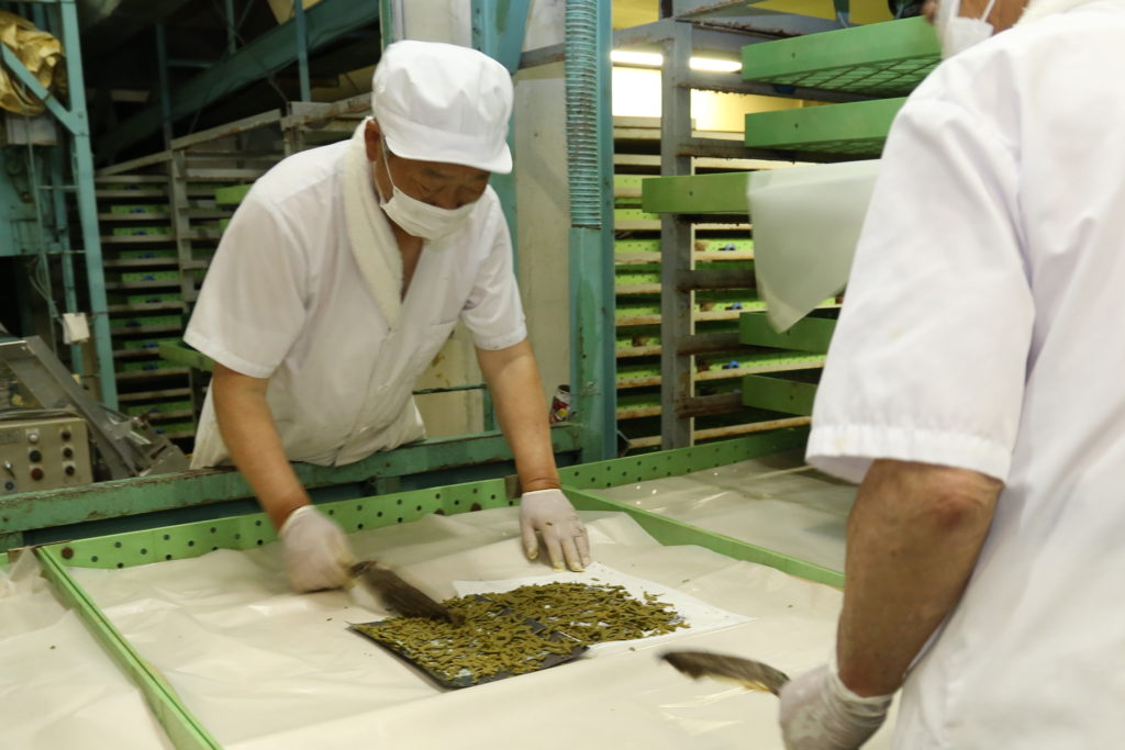 高品質な繭へ 春蚕掃き立て