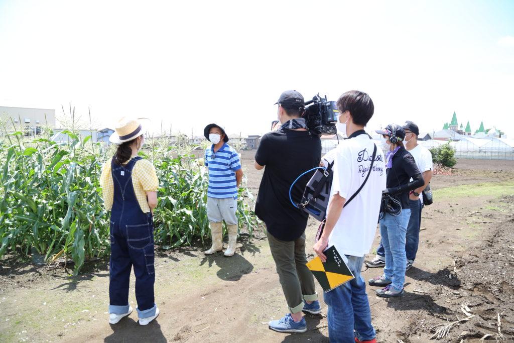 トウモロコシ 魅力TVで紹介 小山市・中島さんの圃場で撮影