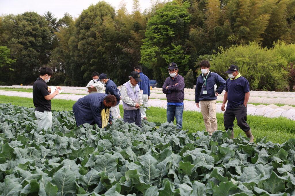 ブロッコリー品質向上へ よく観察し 適期収穫を