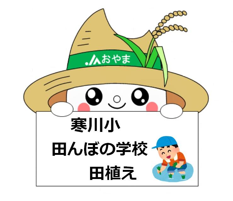 古代米の田植え体験