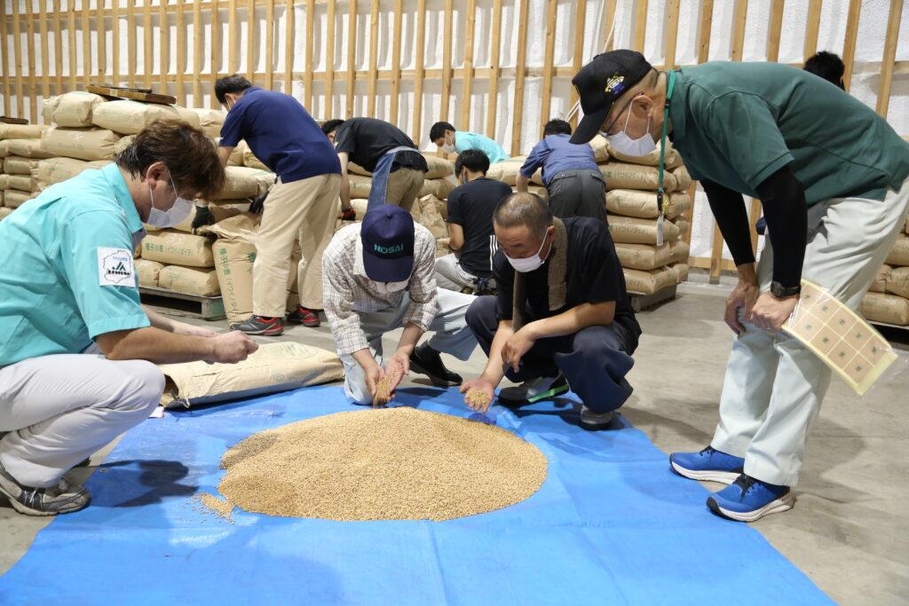 種子小麦 全量合格に 「タマイズミ」など検査